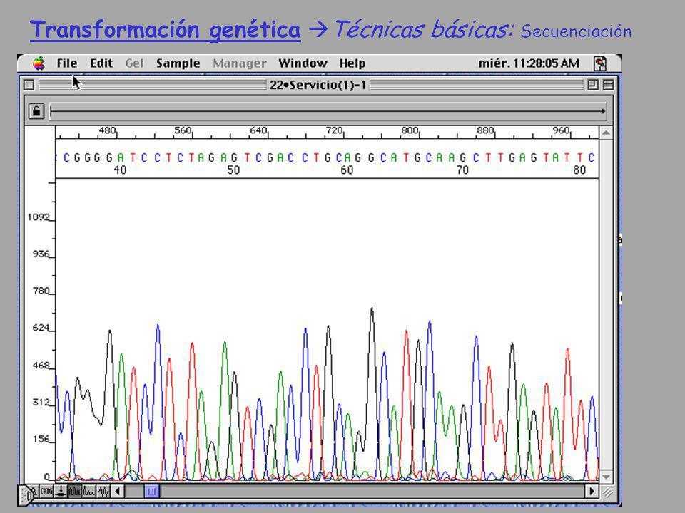 Transformación genética Técnicas básicas: Secuenciación