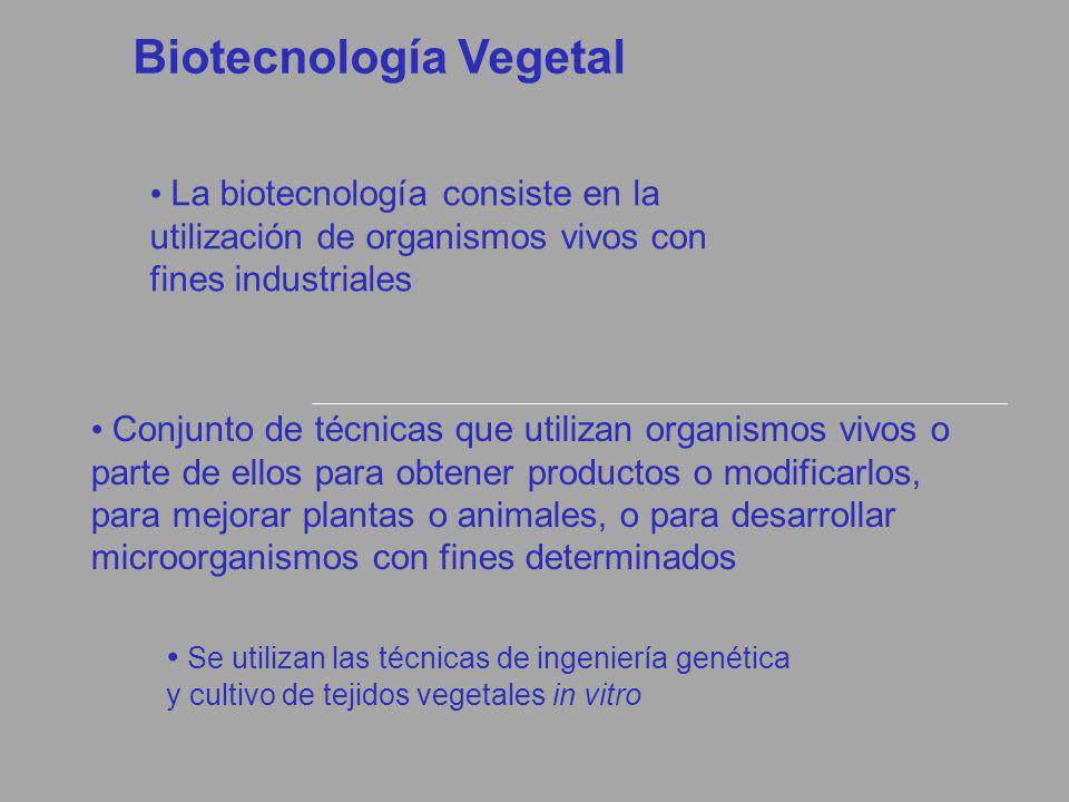Biotecnología Vegetal La biotecnología consiste en la utilización de organismos vivos con fines industriales Conjunto de técnicas que utilizan organis