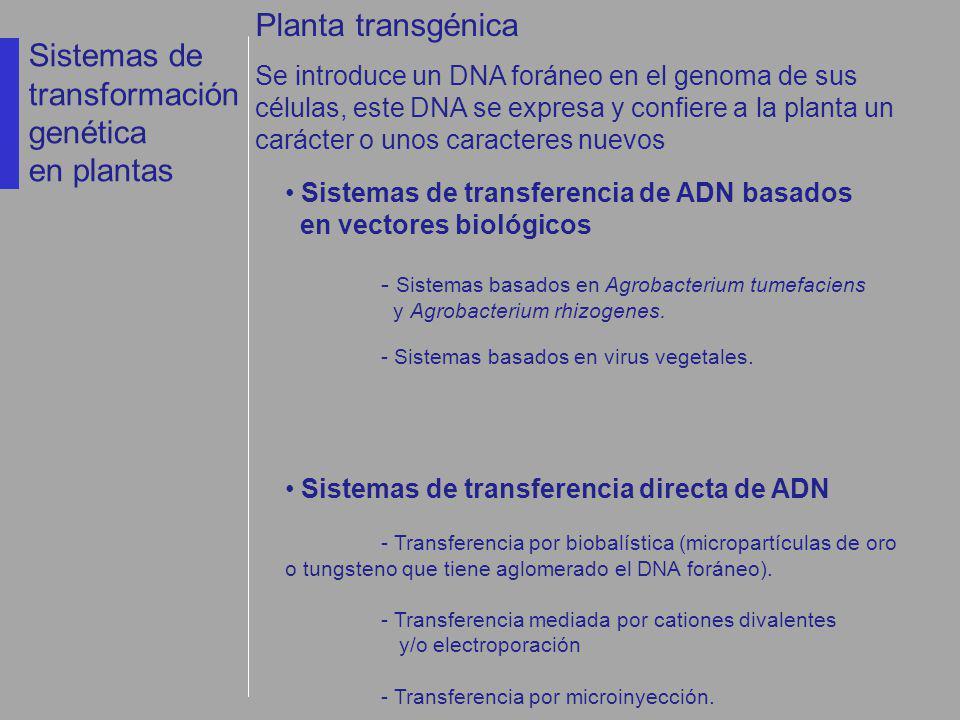 Sistemas de transferencia de ADN basados en vectores biológicos - Sistemas basados en Agrobacterium tumefaciens y Agrobacterium rhizogenes. - Sistemas