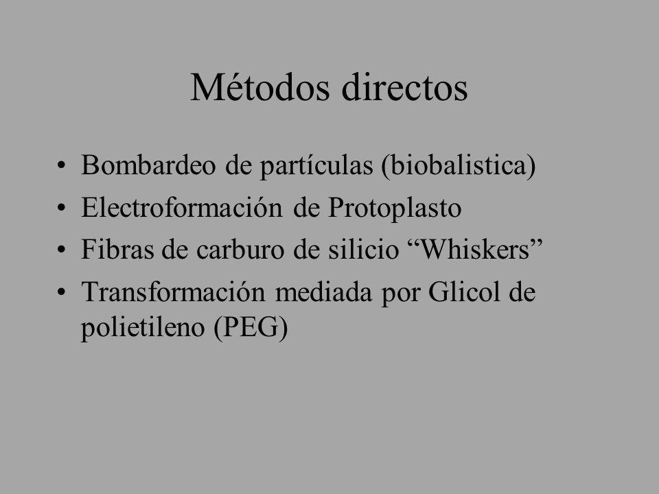 Métodos directos Bombardeo de partículas (biobalistica) Electroformación de Protoplasto Fibras de carburo de silicio Whiskers Transformación mediada p
