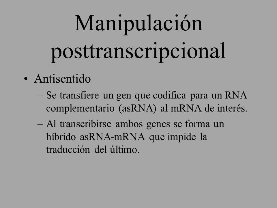 Manipulación posttranscripcional Antisentido –Se transfiere un gen que codifica para un RNA complementario (asRNA) al mRNA de interés. –Al transcribir