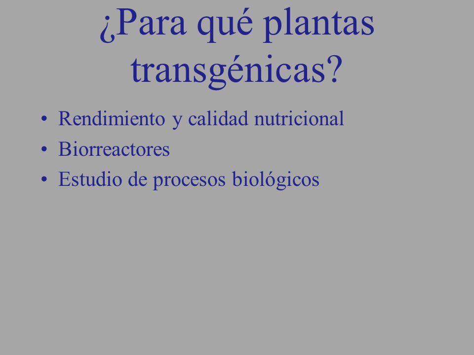 ¿Para qué plantas transgénicas? Rendimiento y calidad nutricional Biorreactores Estudio de procesos biológicos
