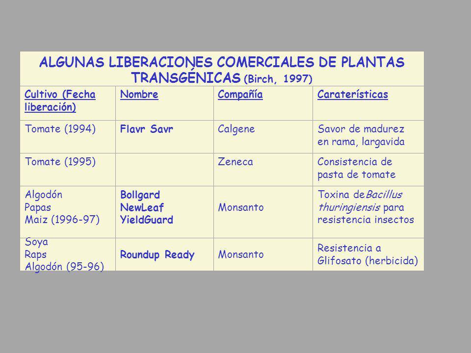 ALGUNAS LIBERACIONES COMERCIALES DE PLANTAS TRANSGÉNICAS (Birch, 1997) Cultivo (Fecha liberación) NombreCompañíaCaraterísticas Tomate (1994)Flavr Savr