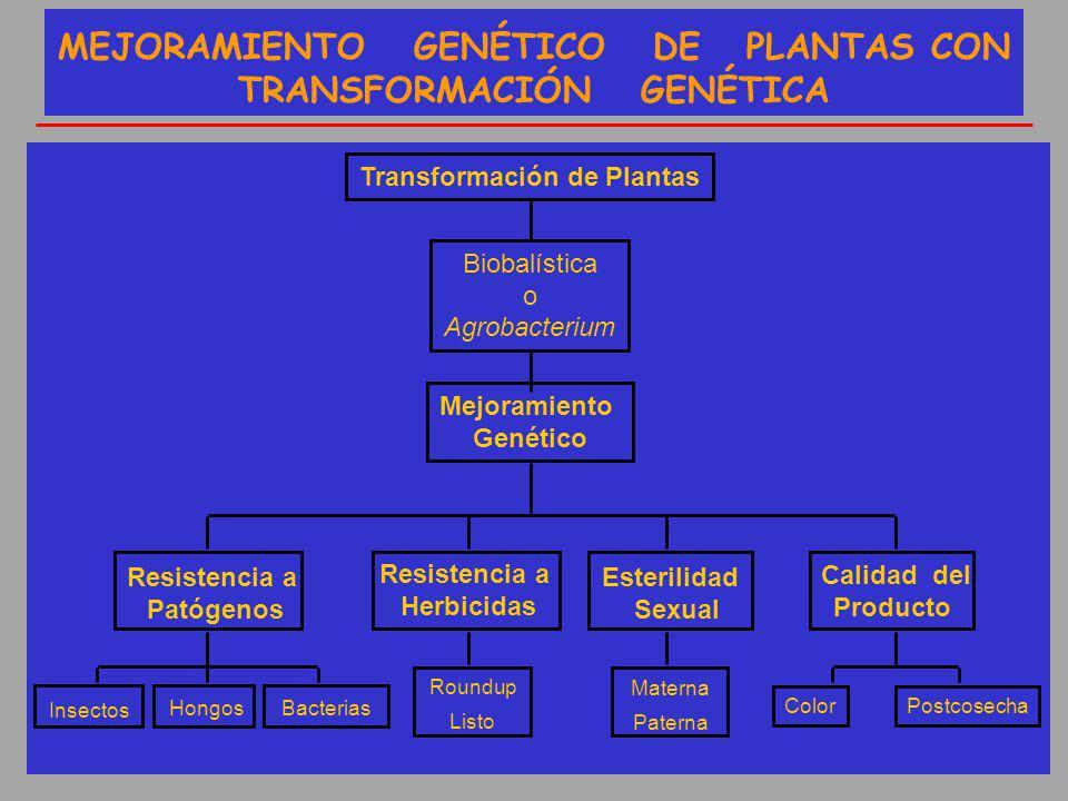 Transformación de Plantas Biobalística o Agrobacterium Mejoramiento Genético ColorPostcosecha Resistencia a Patógenos MEJORAMIENTO GENÉTICO DE PLANTAS