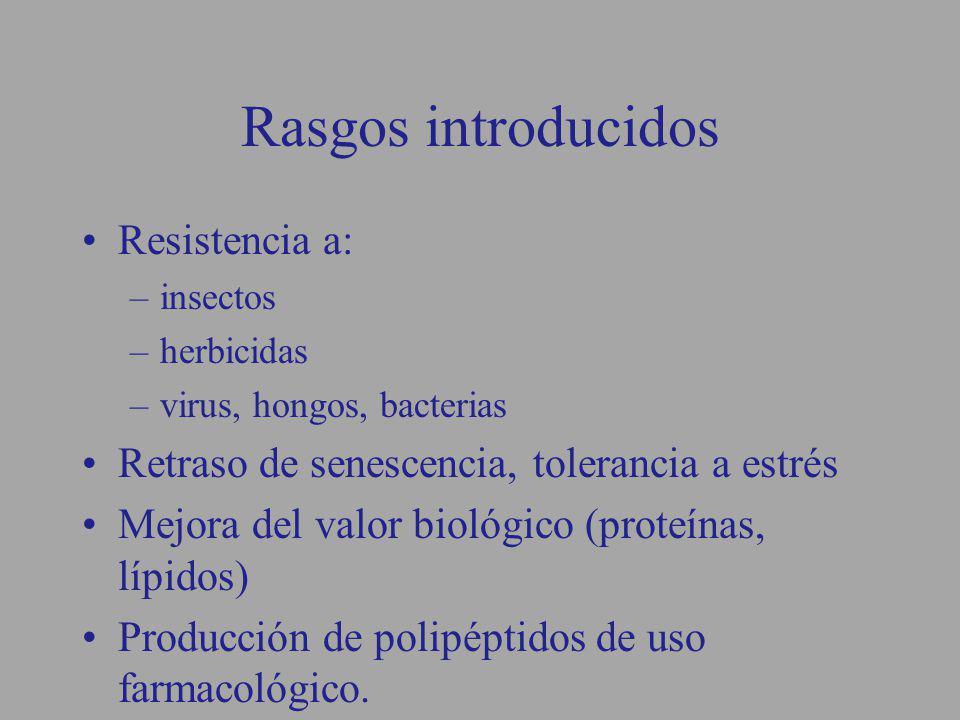 Rasgos introducidos Resistencia a: –insectos –herbicidas –virus, hongos, bacterias Retraso de senescencia, tolerancia a estrés Mejora del valor biológ