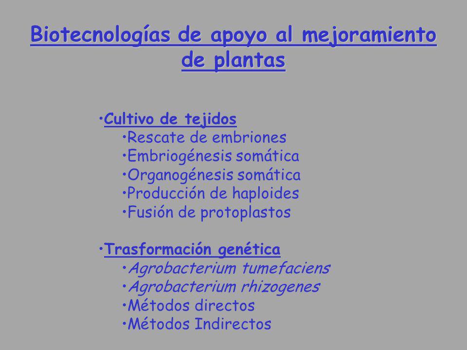 Biotecnologías de apoyo al mejoramiento de plantas Cultivo de tejidos Rescate de embriones Embriogénesis somática Organogénesis somática Producción de
