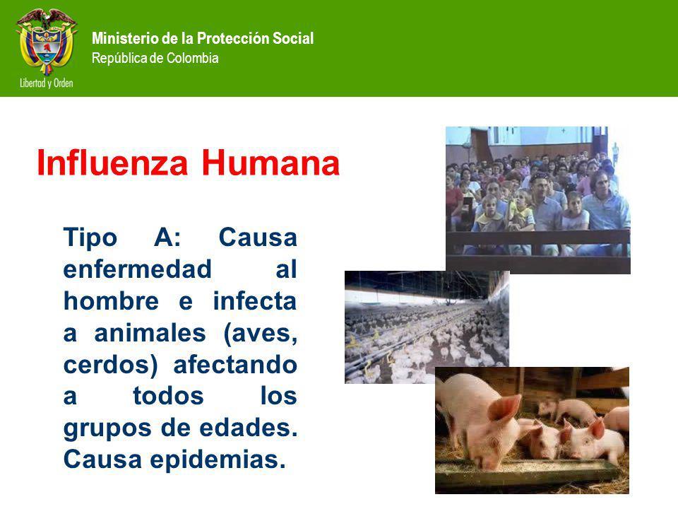 Ministerio de la Protección Social República de Colombia Tipo A: Causa enfermedad al hombre e infecta a animales (aves, cerdos) afectando a todos los grupos de edades.