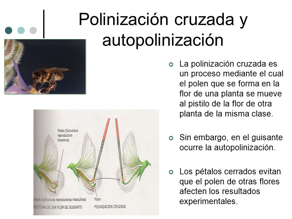 Polinización cruzada y autopolinización La polinización cruzada es un proceso mediante el cual el polen que se forma en la flor de una planta se mueve