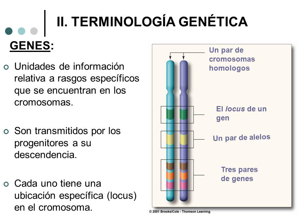II. TERMINOLOGÍA GENÉTICA GENES: Unidades de información relativa a rasgos específicos que se encuentran en los cromosomas. Son transmitidos por los p
