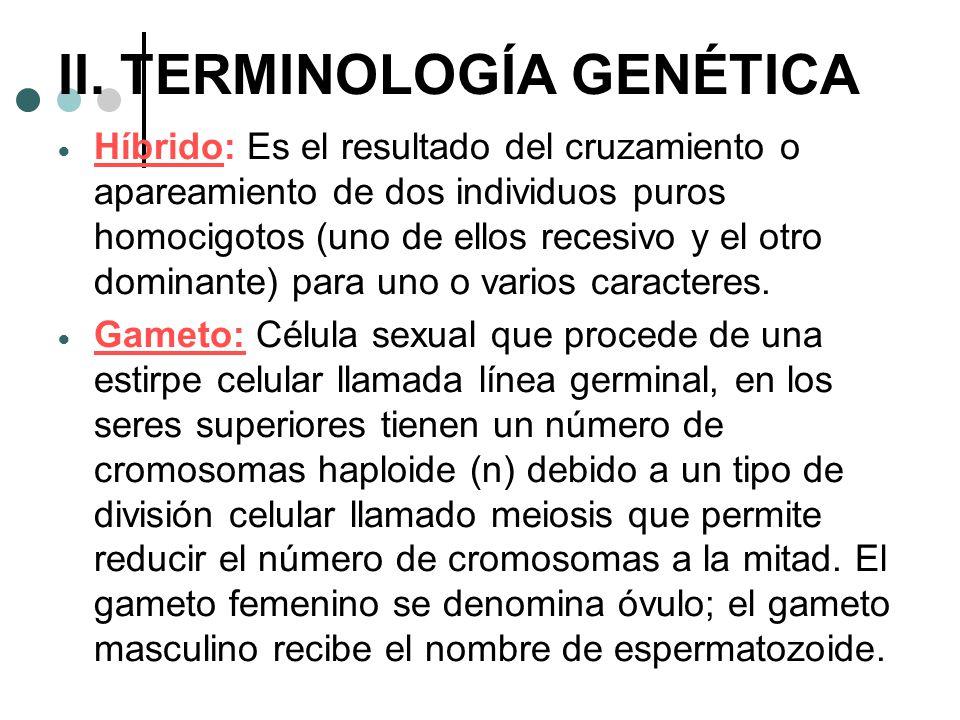 II. TERMINOLOGÍA GENÉTICA Híbrido: Es el resultado del cruzamiento o apareamiento de dos individuos puros homocigotos (uno de ellos recesivo y el otro