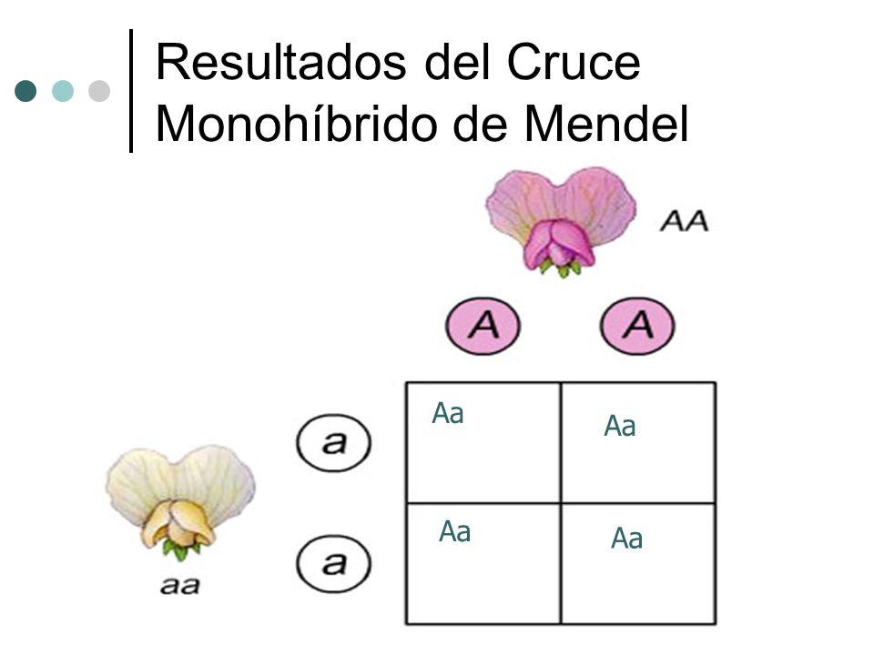 Resultados del Cruce Monohíbrido de Mendel Aa