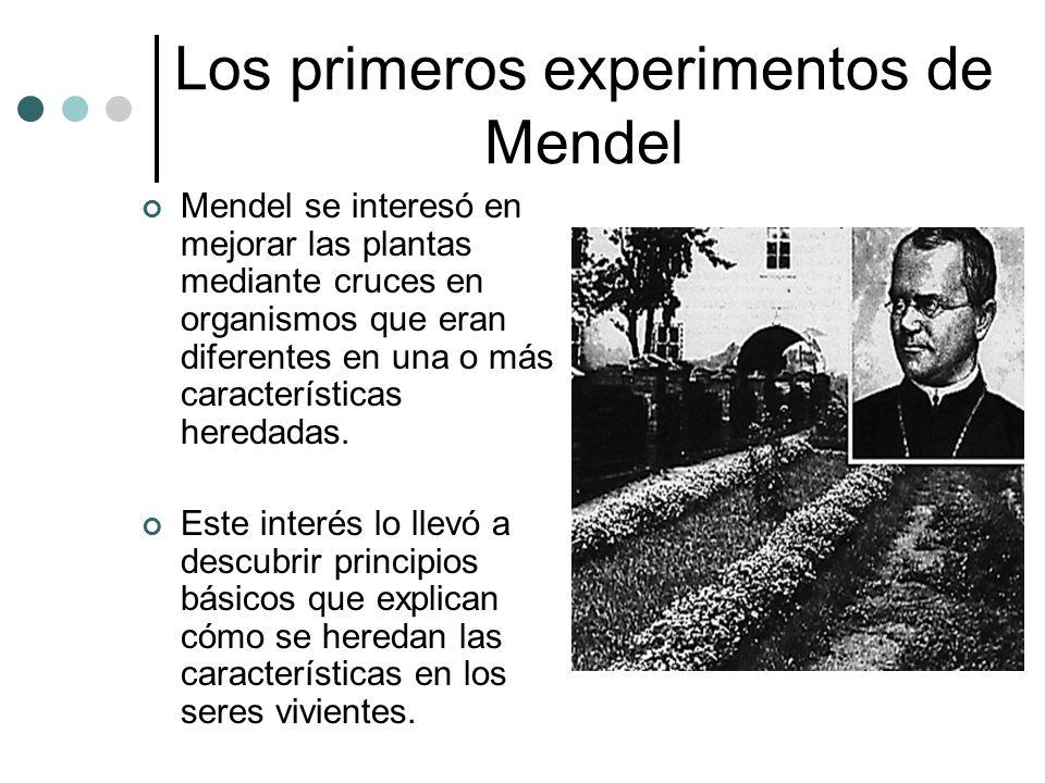 Los primeros experimentos de Mendel Mendel se interesó en mejorar las plantas mediante cruces en organismos que eran diferentes en una o más caracterí