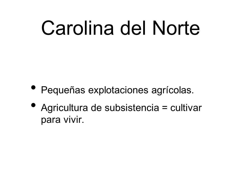 Carolina del Sur Terratenientes ricos establecieron grandes plantaciones.