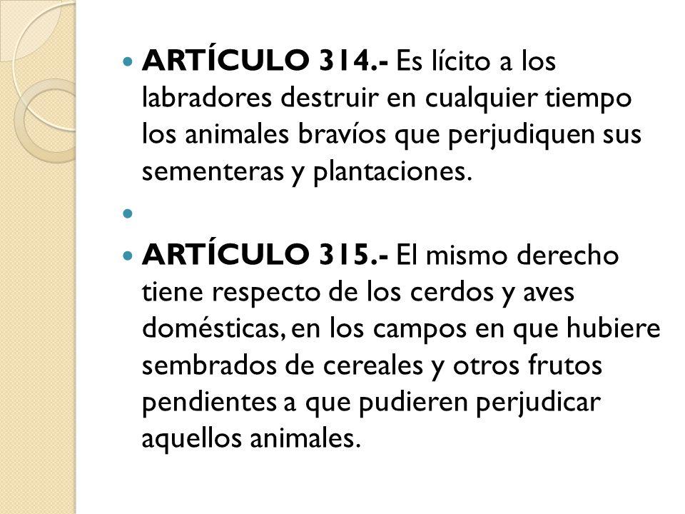 ARTÍCULO 314.- Es lícito a los labradores destruir en cualquier tiempo los animales bravíos que perjudiquen sus sementeras y plantaciones. ARTÍCULO 31