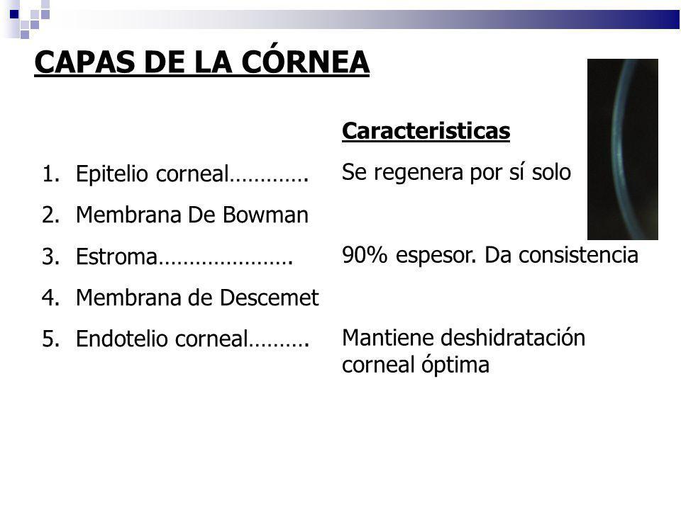 CAPAS DE LA CÓRNEA 1.Epitelio corneal…………. 2.Membrana De Bowman 3.Estroma…………………. 4.Membrana de Descemet 5.Endotelio corneal………. Caracteristicas Se re