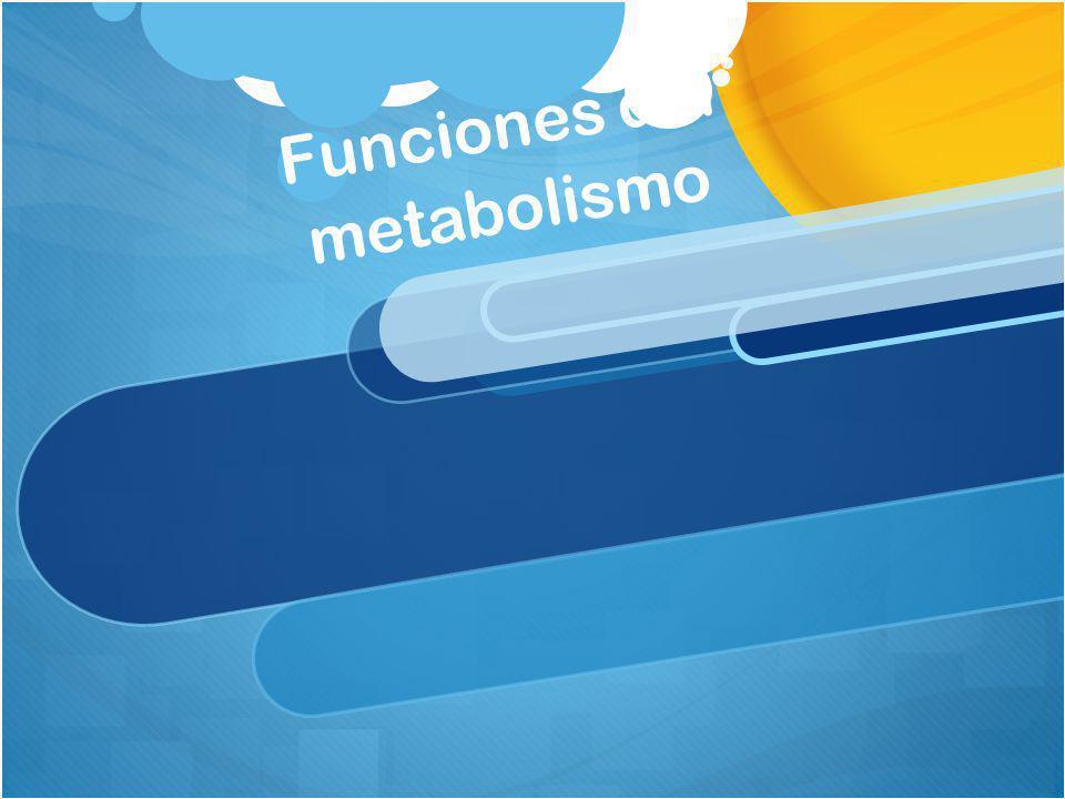 Funciones del metabolismo