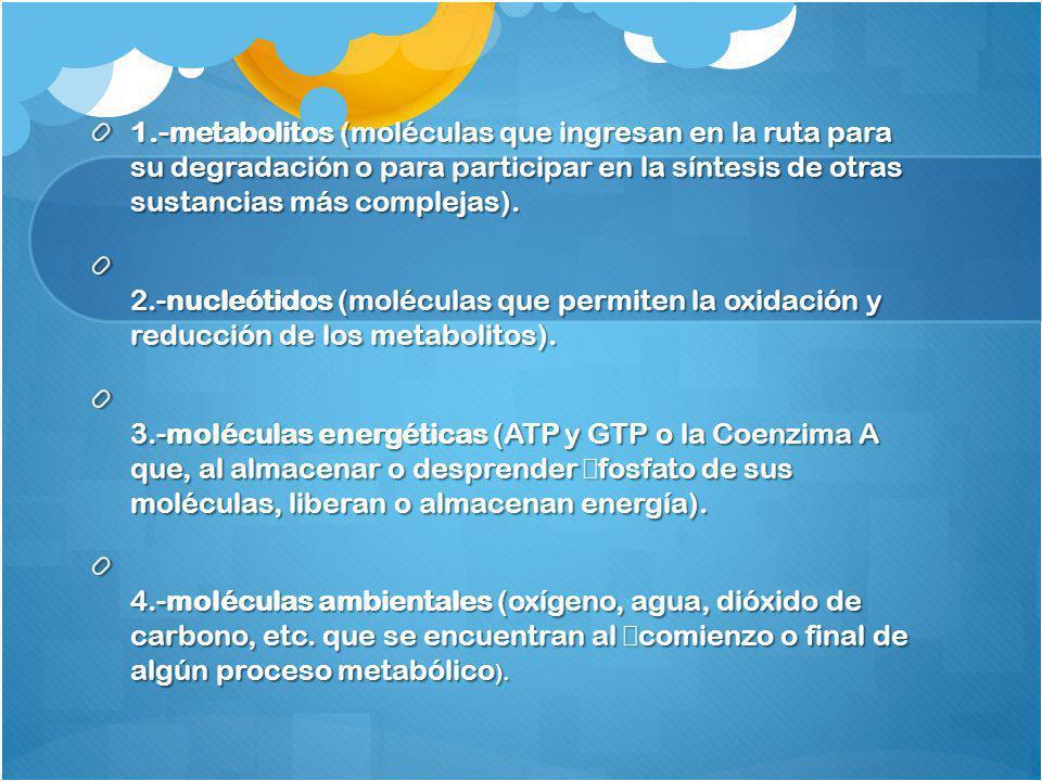 1.-metabolitos (moléculas que ingresan en la ruta para su degradación o para participar en la síntesis de otras sustancias más complejas). 2.-nucleóti