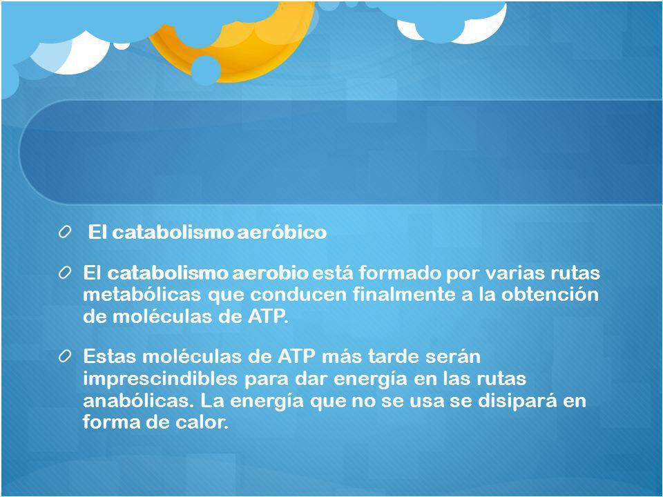El catabolismo aeróbico El catabolismo aerobio está formado por varias rutas metabólicas que conducen finalmente a la obtención de moléculas de ATP. E