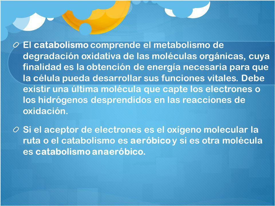 El catabolismo comprende el metabolismo de degradación oxidativa de las moléculas orgánicas, cuya finalidad es la obtención de energía necesaria para