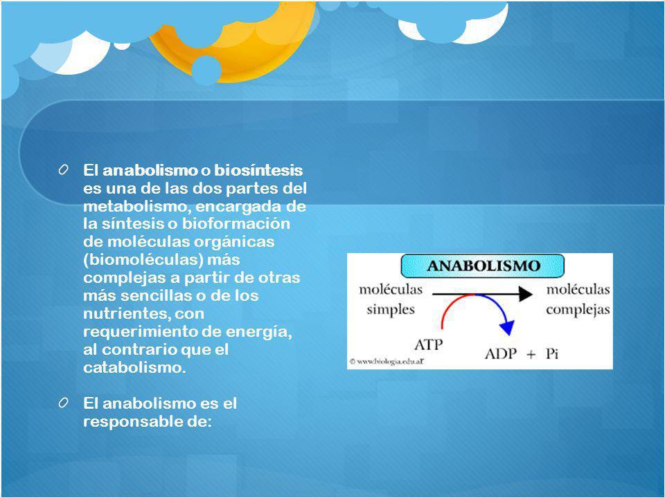 El anabolismo o biosíntesis es una de las dos partes del metabolismo, encargada de la síntesis o bioformación de moléculas orgánicas (biomoléculas) má