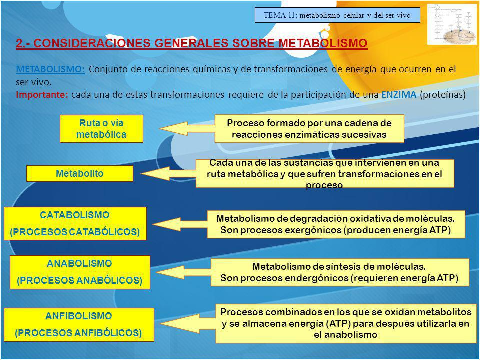 TEMA 11: metabolismo celular y del ser vivo 2.- CONSIDERACIONES GENERALES SOBRE METABOLISMO METABOLISMO: Conjunto de reacciones químicas y de transfor