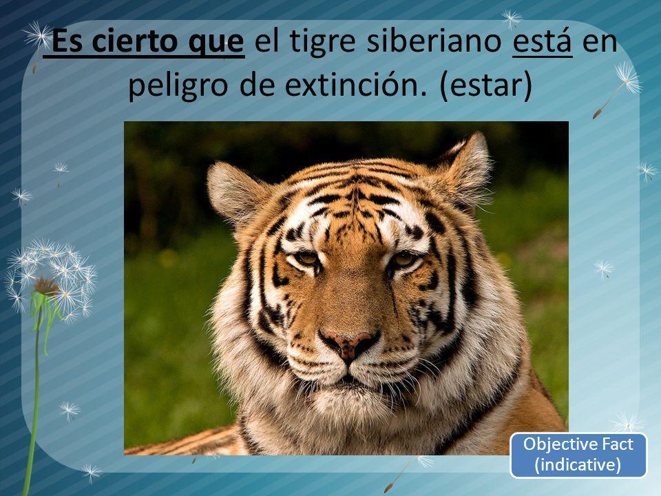 Es cierto que el tigre siberiano está en peligro de extinción. (estar) Objective Fact (indicative)