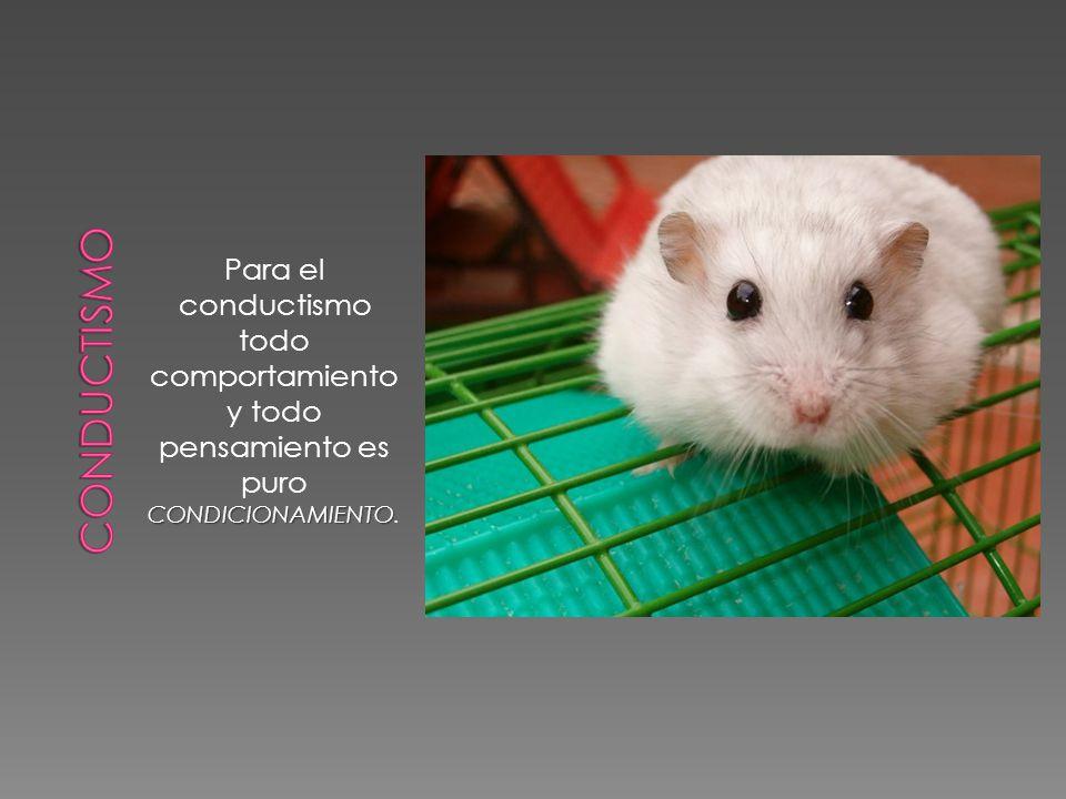 CONDICIONAMIENTO Para el conductismo todo comportamiento y todo pensamiento es puro CONDICIONAMIENTO.