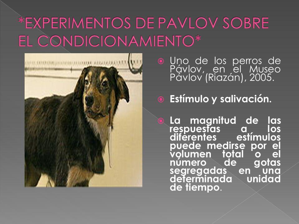 Uno de los perros de Pávlov, en el Museo Pávlov (Riazán), 2005. Estímulo y salivación. La magnitud de las respuestas a los diferentes estímulos puede