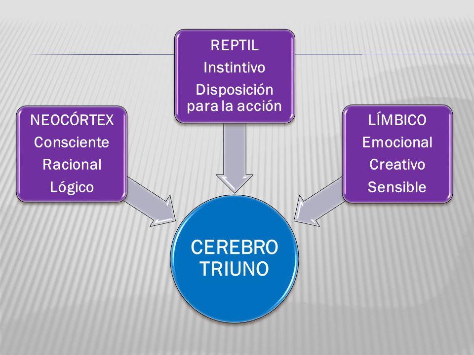 CEREBRO TRIUNO NEOCÓRTEX Consciente Racional Lógico REPTIL Instintivo Disposición para la acción LÍMBICO Emocional Creativo Sensible