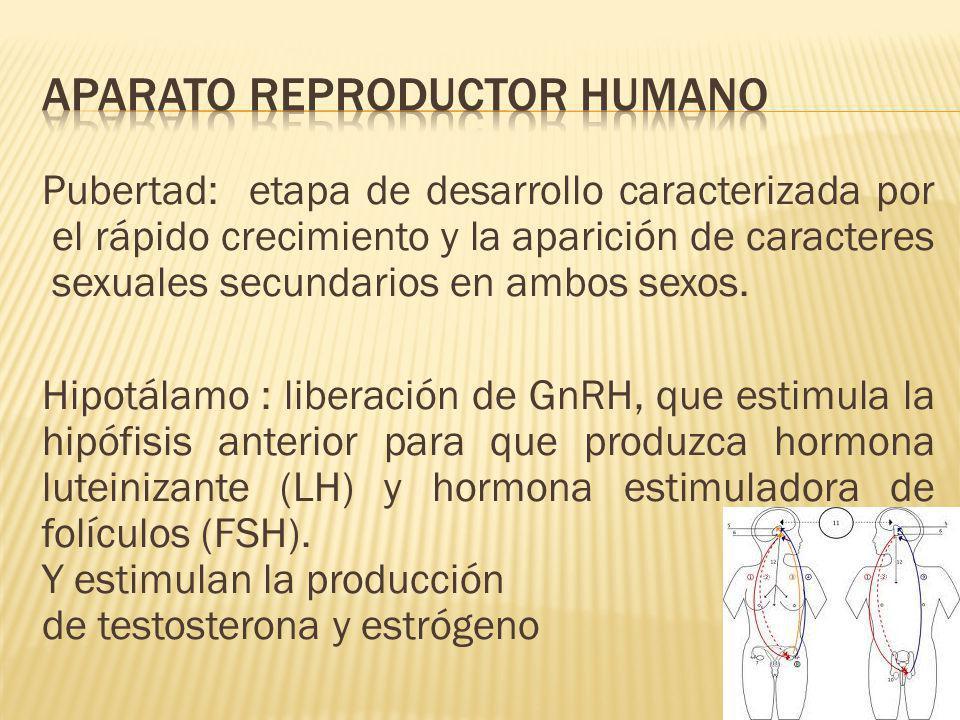 Los espermatozoides se introducen en el cuerpo de la hembra, donde tiene lugar la fecundación. Variación de la fecundación interna: espermatóforo (por