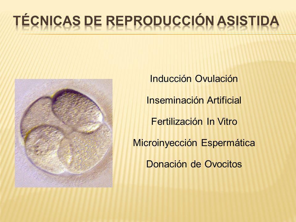Comienza de 2 a 3 días después de que el óvulo fertilizado entre en el útero, en los días 18 a 19 del ciclo. 5 a 7 días después de la fertilización