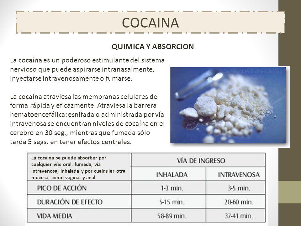COCAINA La cocaína es un poderoso estimulante del sistema nervioso que puede aspirarse intranasalmente, inyectarse intravenosamente o fumarse. La coca