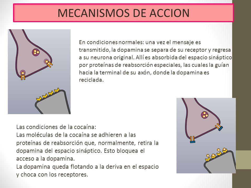 MECANISMOS DE ACCION En condiciones normales: una vez el mensaje es transmitido, la dopamina se separa de su receptor y regresa a su neurona original.