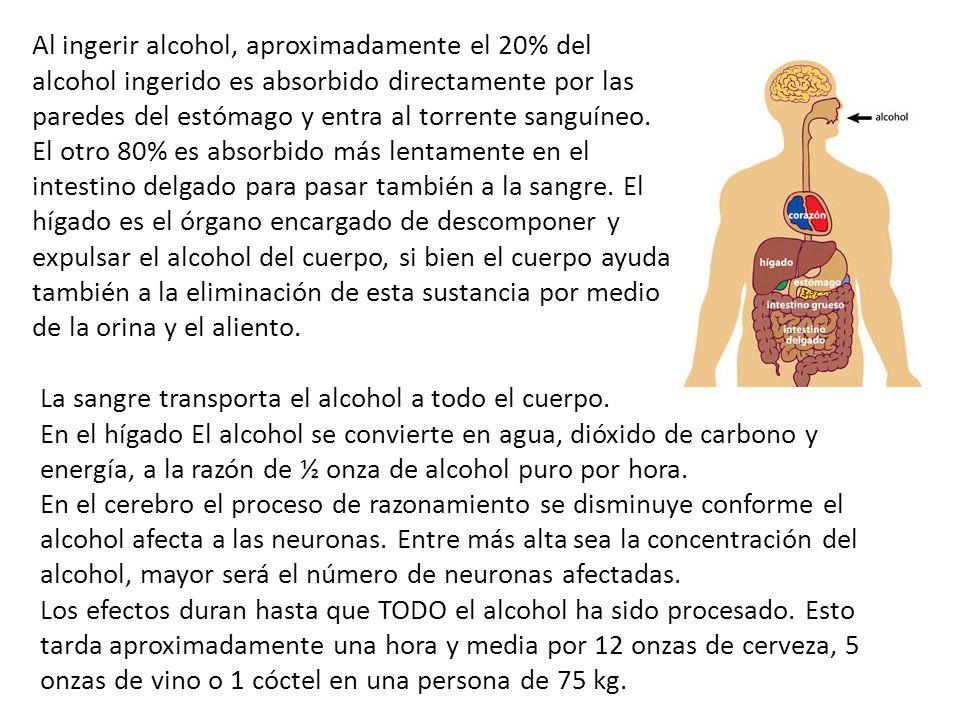 La sangre transporta el alcohol a todo el cuerpo. En el hígado El alcohol se convierte en agua, dióxido de carbono y energía, a la razón de ½ onza de