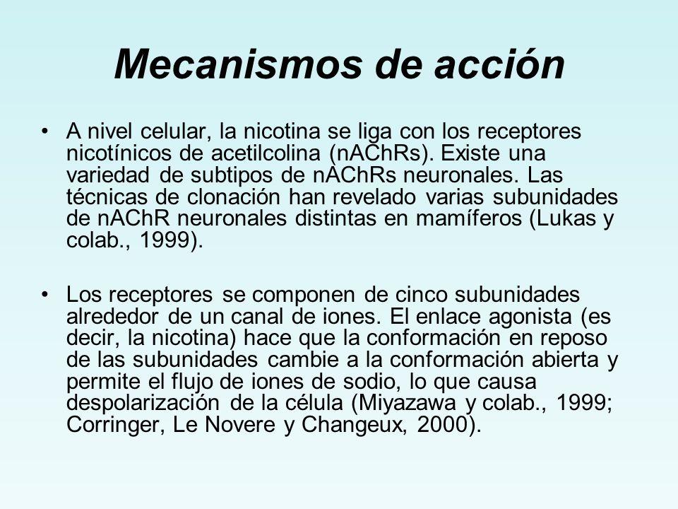 Mecanismos de acción A nivel celular, la nicotina se liga con los receptores nicotínicos de acetilcolina (nAChRs). Existe una variedad de subtipos de