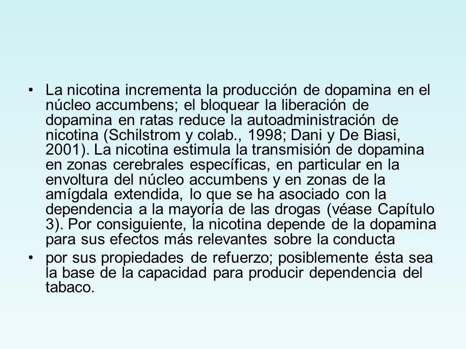 La nicotina incrementa la producción de dopamina en el núcleo accumbens; el bloquear la liberación de dopamina en ratas reduce la autoadministración d