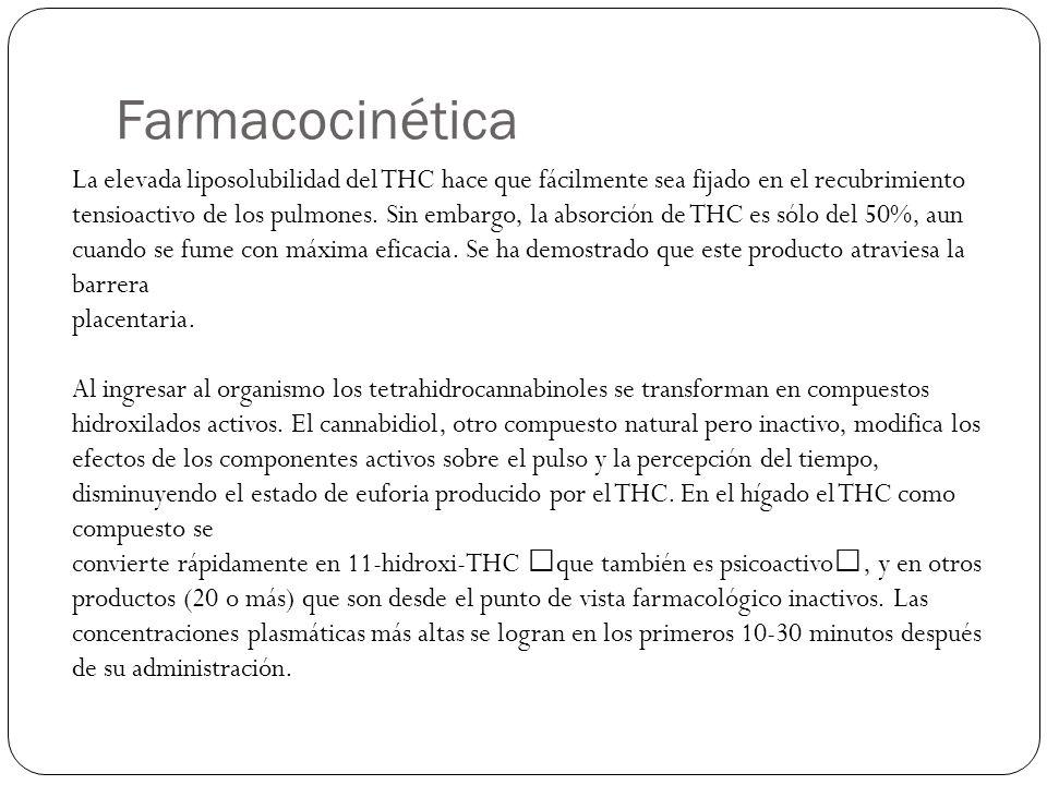 Farmacocinética La elevada liposolubilidad del THC hace que fácilmente sea fijado en el recubrimiento tensioactivo de los pulmones. Sin embargo, la ab
