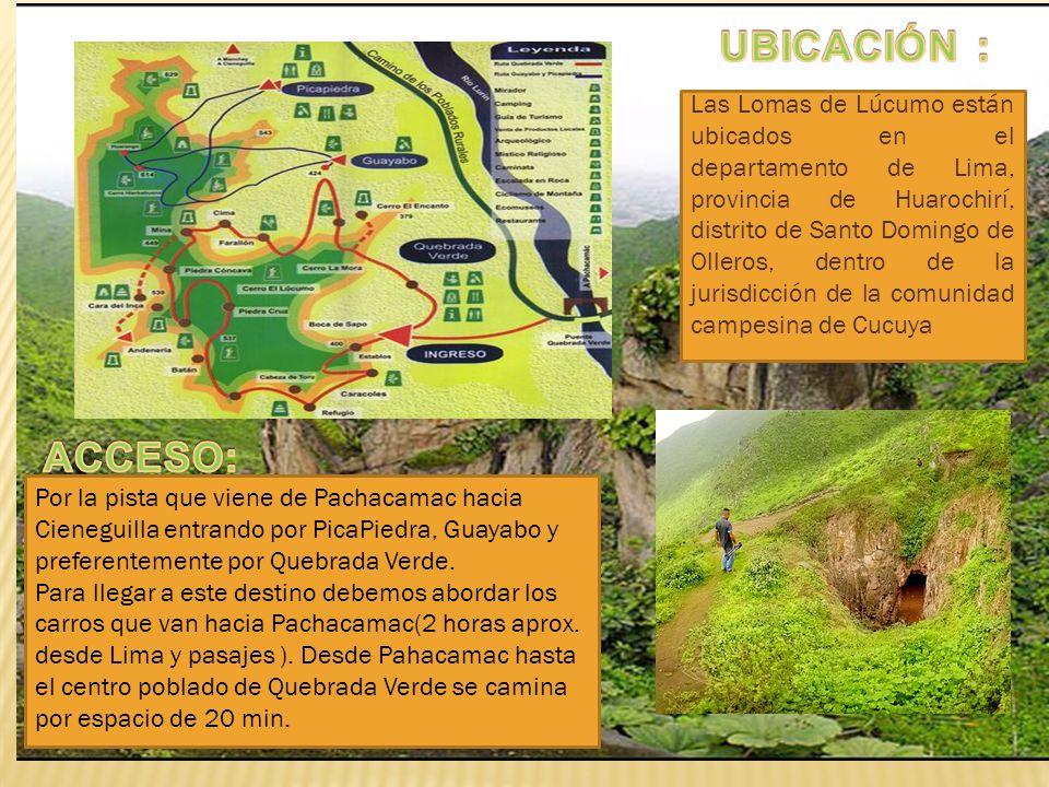 Las Lomas de Lúcumo están ubicados en el departamento de Lima, provincia de Huarochirí, distrito de Santo Domingo de Olleros, dentro de la jurisdicció