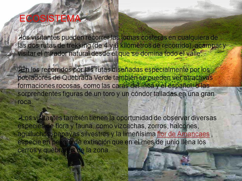 ECOSISTEMA los visitantes pueden recorrer las lomas costeras en cualquiera de las dos rutas de trekking (de 4 y 6 kilómetros de recorrido), acampar y