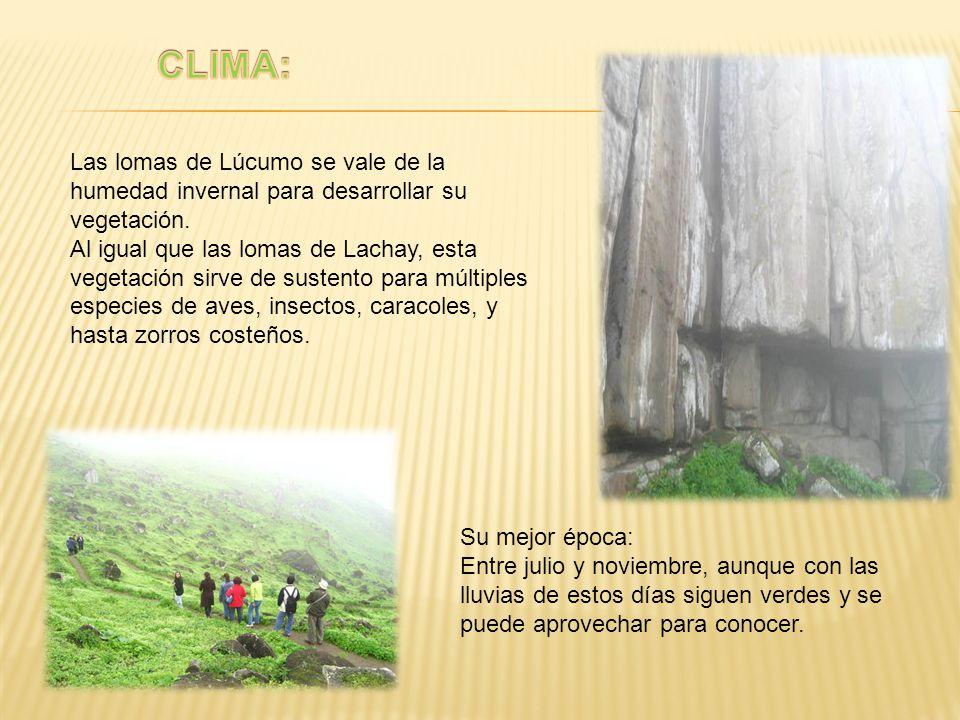 Las lomas de Lúcumo se vale de la humedad invernal para desarrollar su vegetación. Al igual que las lomas de Lachay, esta vegetación sirve de sustento