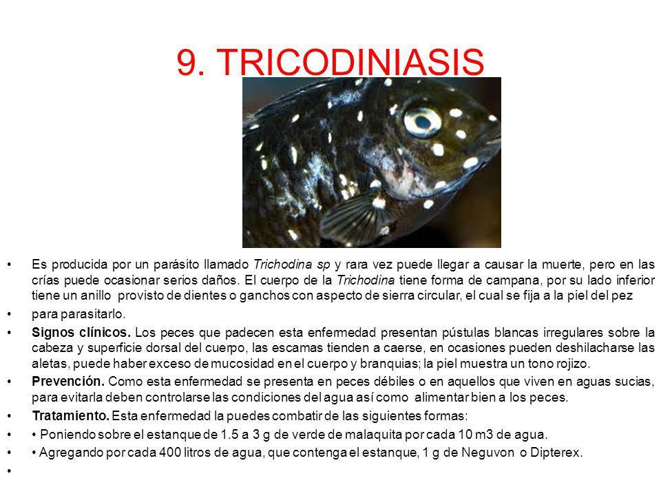 9. TRICODINIASIS Es producida por un parásito llamado Trichodina sp y rara vez puede llegar a causar la muerte, pero en las crías puede ocasionar seri