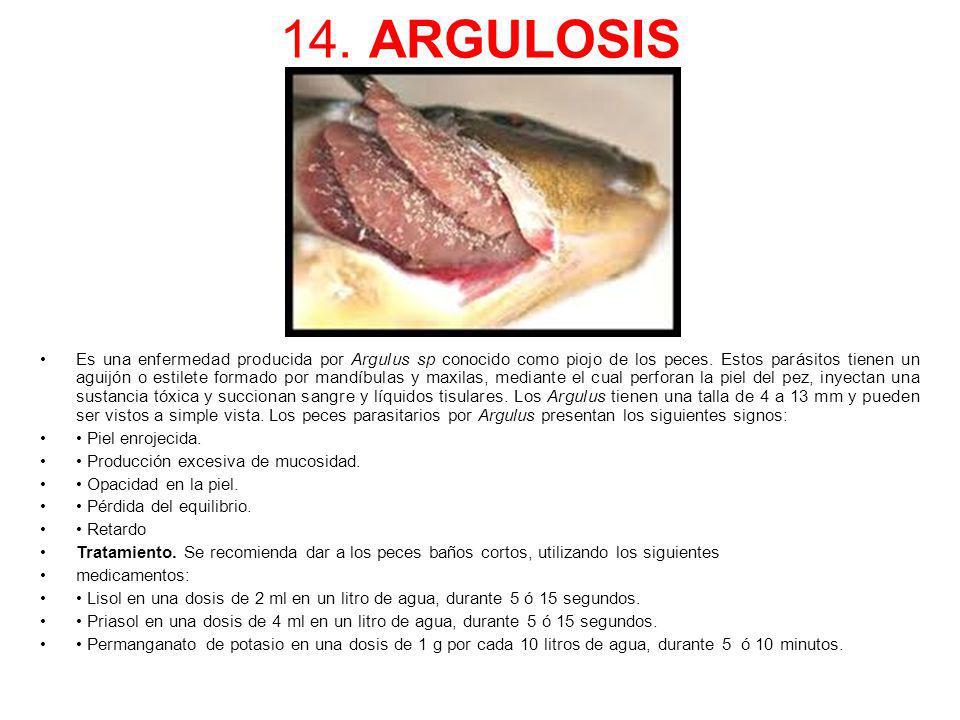 14. ARGULOSIS Es una enfermedad producida por Argulus sp conocido como piojo de los peces. Estos parásitos tienen un aguijón o estilete formado por ma