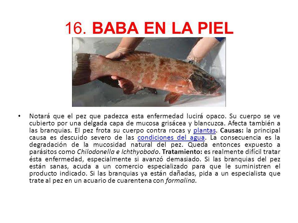 16. BABA EN LA PIEL Notará que el pez que padezca esta enfermedad lucirá opaco. Su cuerpo se ve cubierto por una delgada capa de mucosa grisácea y bla