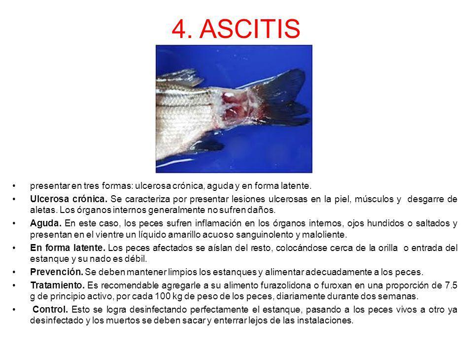 4. ASCITIS presentar en tres formas: ulcerosa crónica, aguda y en forma latente. Ulcerosa crónica. Se caracteriza por presentar lesiones ulcerosas en
