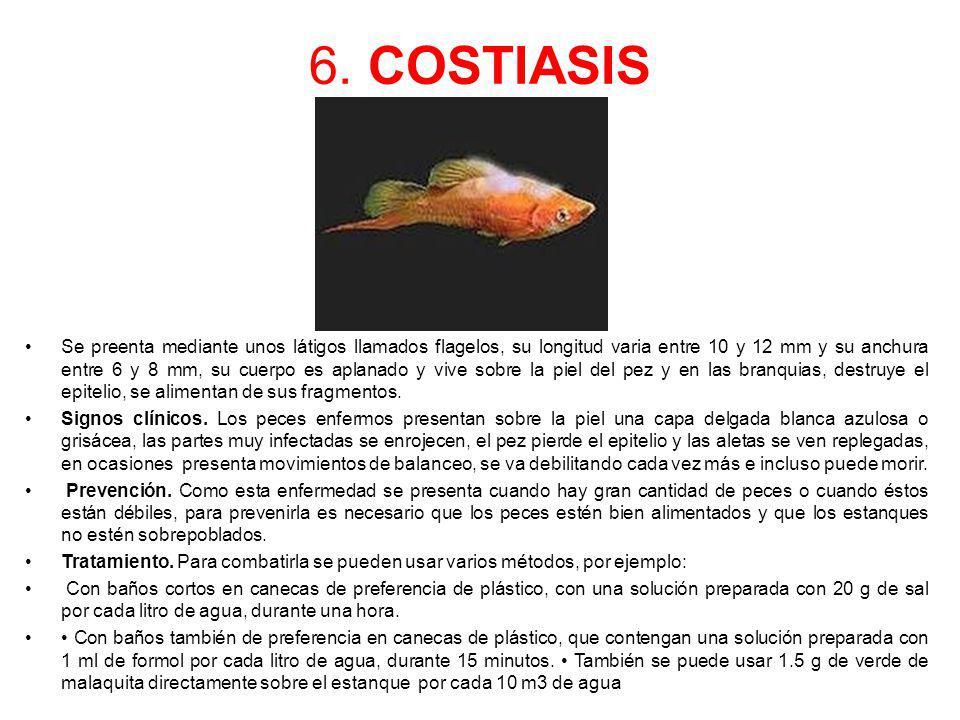 6. COSTIASIS Se preenta mediante unos látigos llamados flagelos, su longitud varia entre 10 y 12 mm y su anchura entre 6 y 8 mm, su cuerpo es aplanado