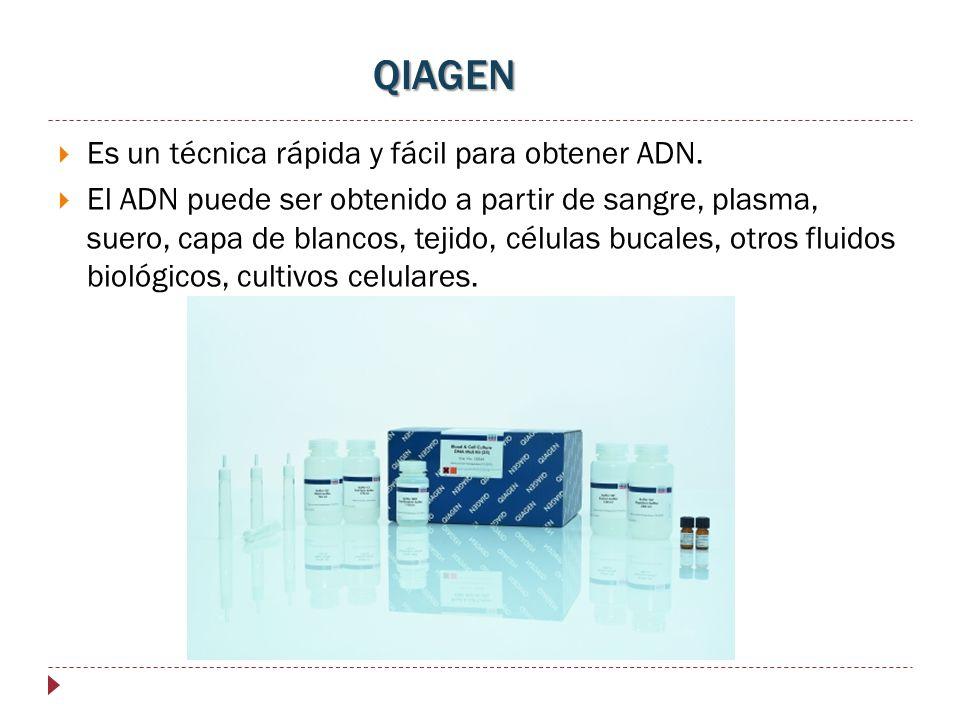 QIAGEN Es un técnica rápida y fácil para obtener ADN. El ADN puede ser obtenido a partir de sangre, plasma, suero, capa de blancos, tejido, células bu