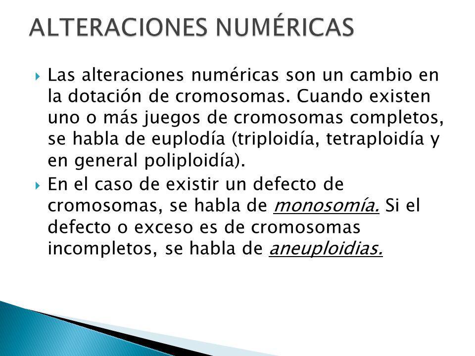 Las alteraciones numéricas son un cambio en la dotación de cromosomas.