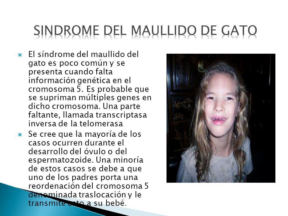 El síndrome del maullido del gato es poco común y se presenta cuando falta información genética en el cromosoma 5. Es probable que se supriman múltipl