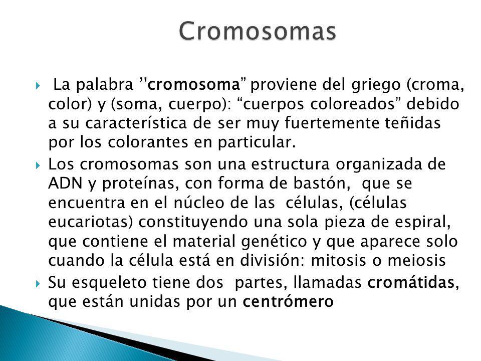La palabra cromosoma proviene del griego (croma, color) y (soma, cuerpo): cuerpos coloreados debido a su característica de ser muy fuertemente teñidas por los colorantes en particular.