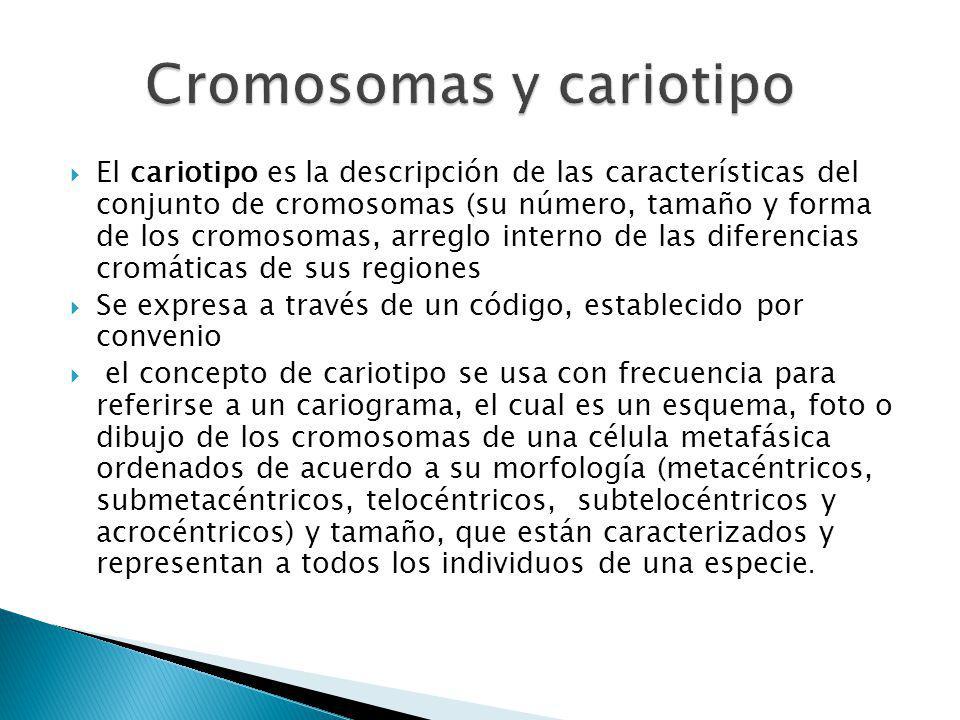 El cariotipo es la descripción de las características del conjunto de cromosomas (su número, tamaño y forma de los cromosomas, arreglo interno de las diferencias cromáticas de sus regiones Se expresa a través de un código, establecido por convenio el concepto de cariotipo se usa con frecuencia para referirse a un cariograma, el cual es un esquema, foto o dibujo de los cromosomas de una célula metafásica ordenados de acuerdo a su morfología (metacéntricos, submetacéntricos, telocéntricos, subtelocéntricos y acrocéntricos) y tamaño, que están caracterizados y representan a todos los individuos de una especie.
